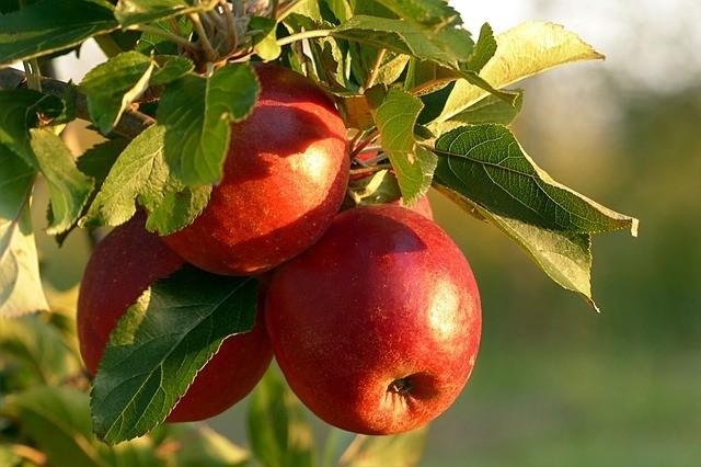 Gesundheit Gemüse Spruchdestages